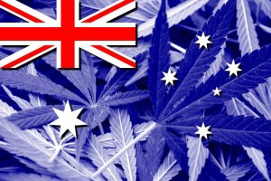 These Are The Top 3 Cannabis Companies to Watch in The Australian Marijuana Market