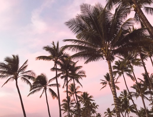 maui, sunset, honeymoon, hawaii, palm trees