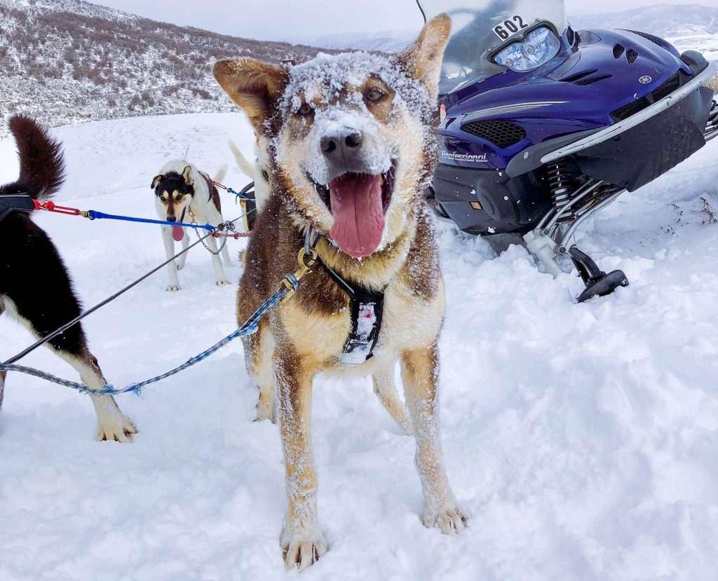 Dog Sledding, Where to go dog sledding, dog sledding in Colorado, dog sledding Steamboat Springs, Steamboat Springs things to do, Dog sledding experience, bucket list, bucket list travel, Colorado winter, Steamboat Springs, Colorado, #dogsledding #steamboatsprings #travelcolorado #bucketlist #travelmore