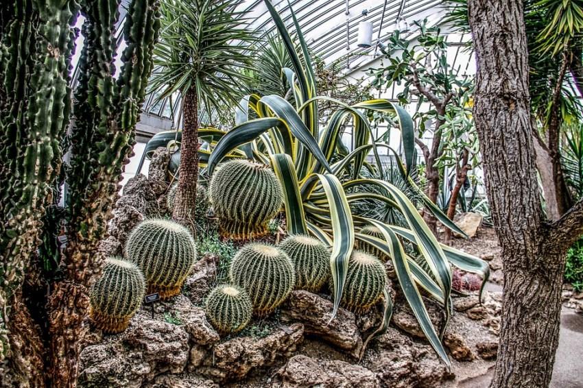cactus-pixabay