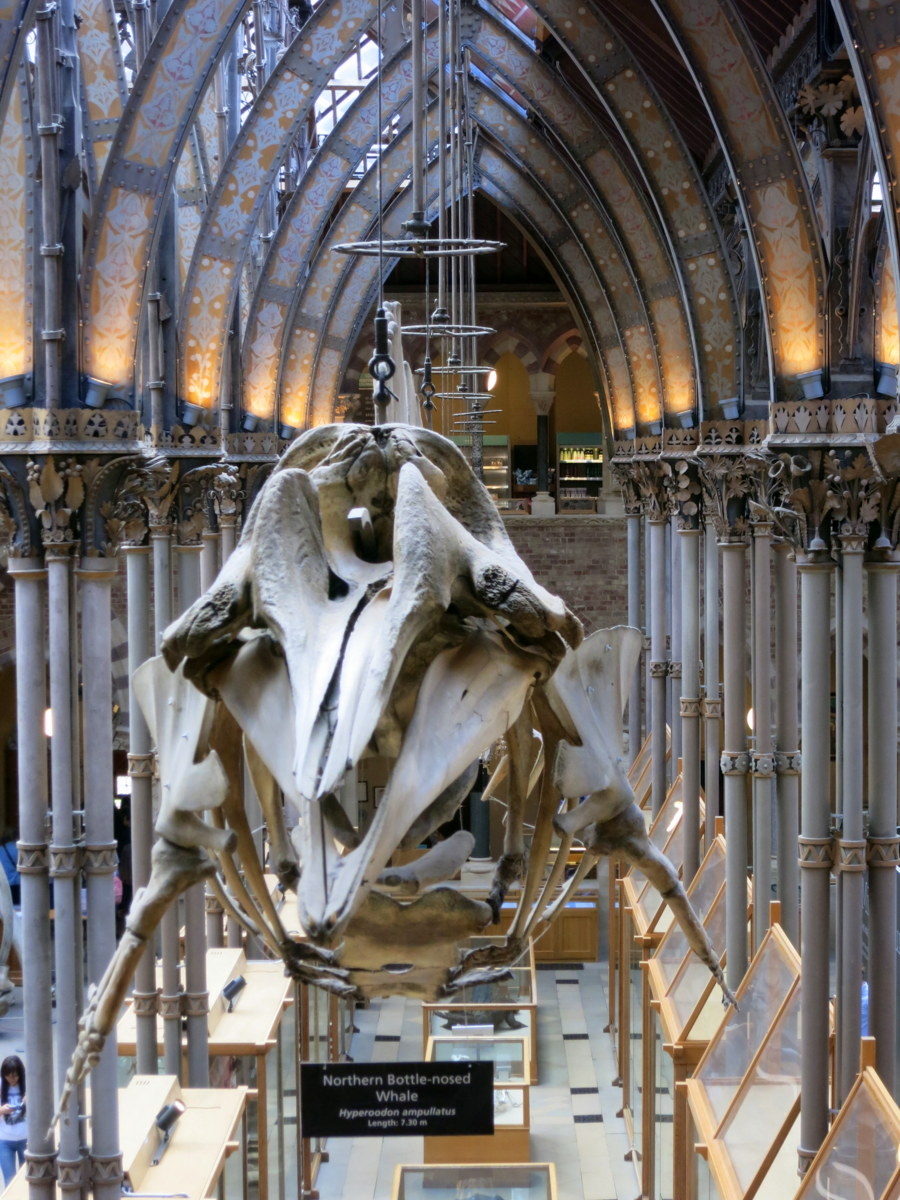 oxford natural history museum - oxford natural history museum pitt rivers museum - Oxford is an historic university town with beautiful sights to see. Here are eight things you should see and do if you are in Oxford for a few days. - Weekend in Oxford