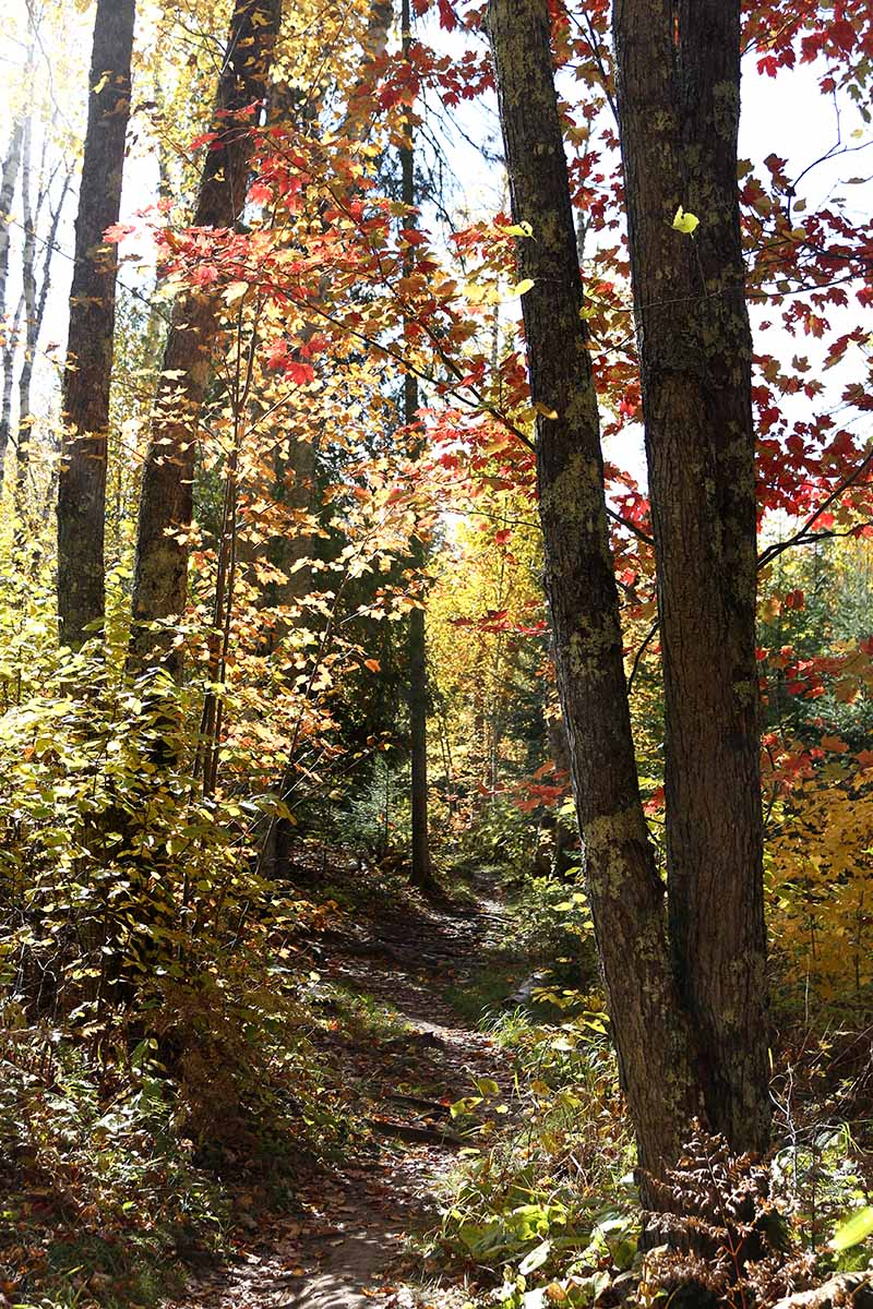 Hiking & Backpacking on the Superior Hiking Trail in Minnesota - tips & guide