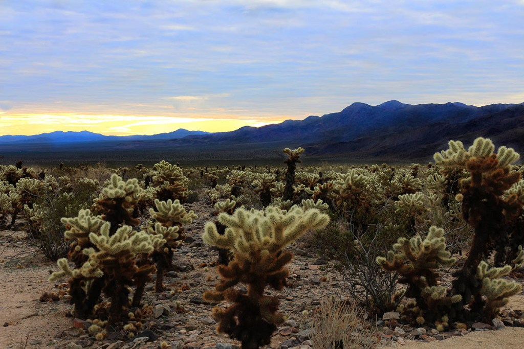 Guide to Joshua Tree National Park: where to camp, hike, climb and stay near the park