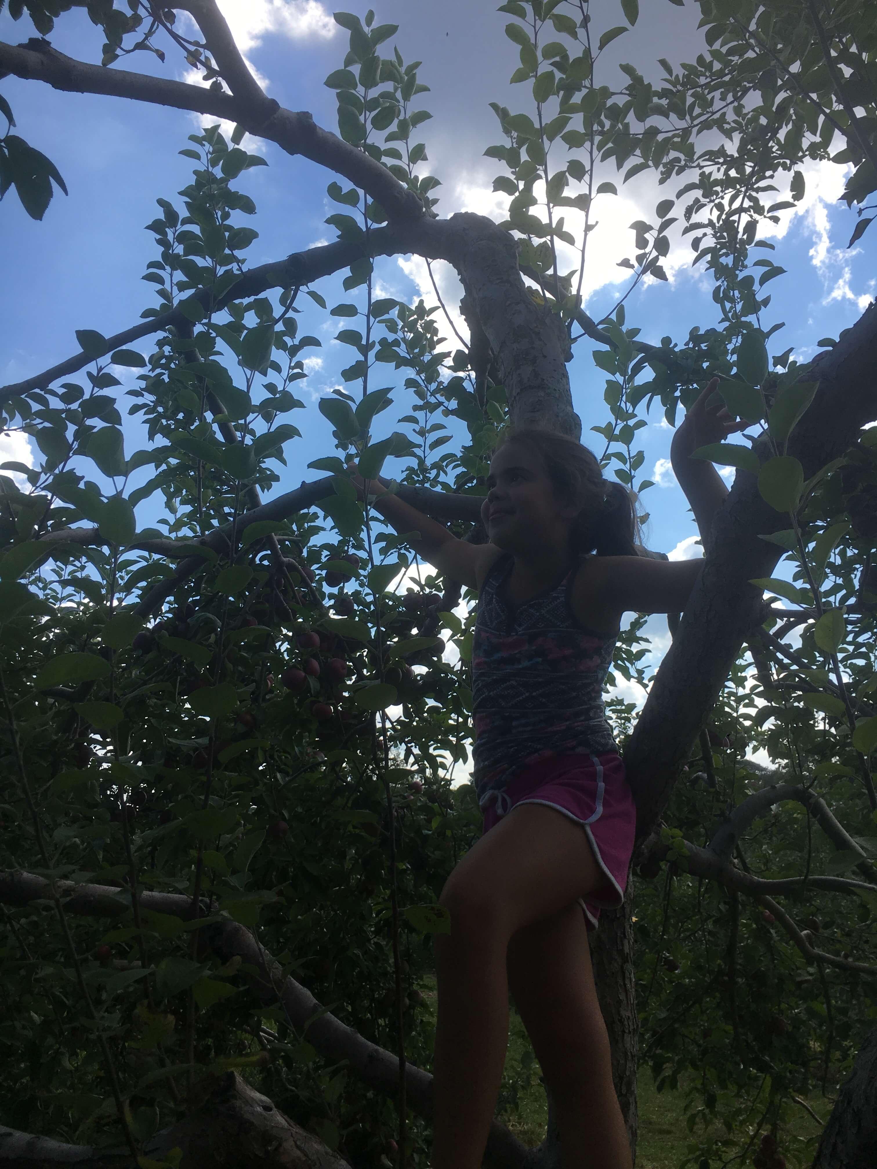 apple climbing at harvest moon orchard