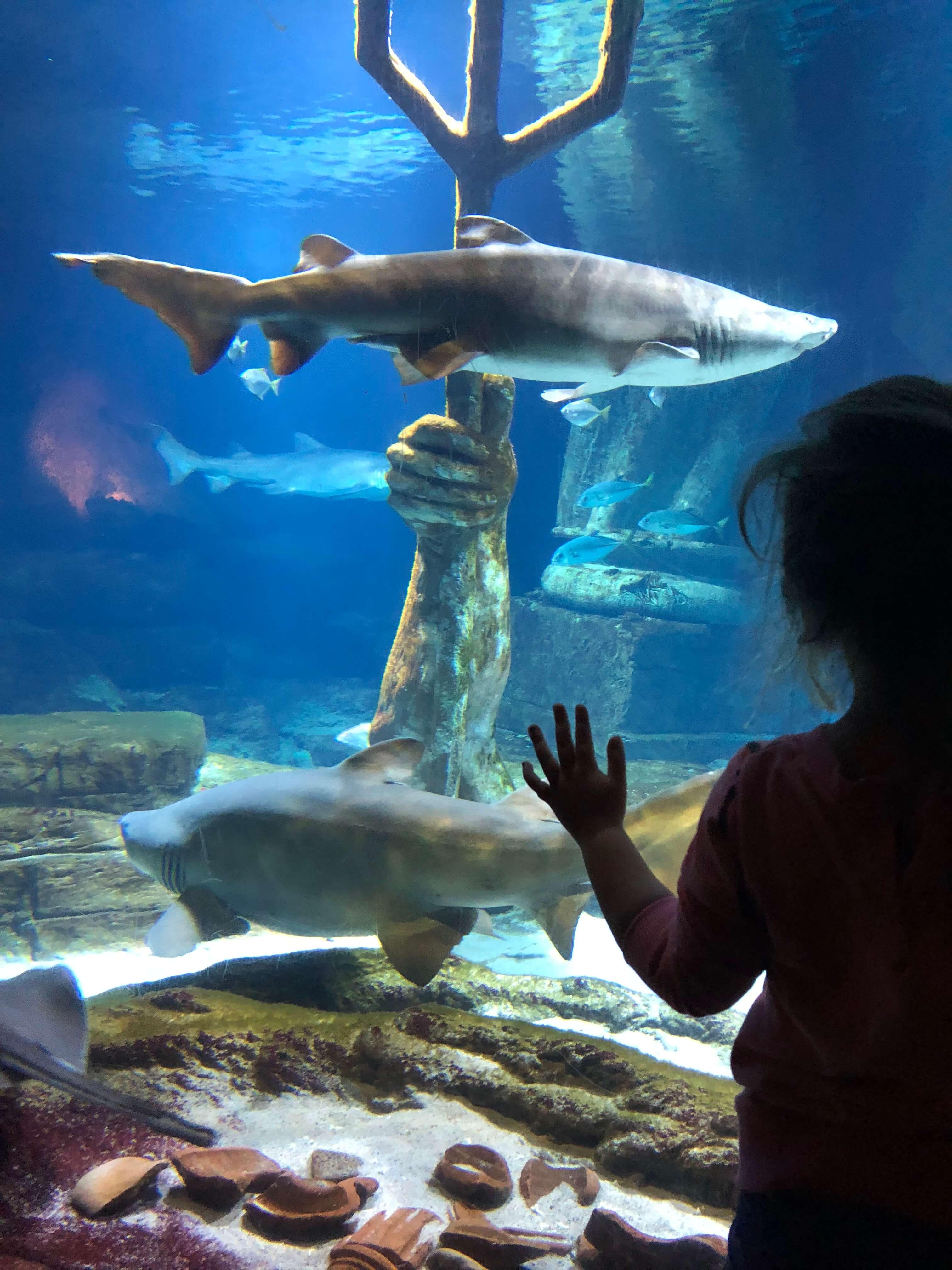 sharks long island aquarium trip to the north fork
