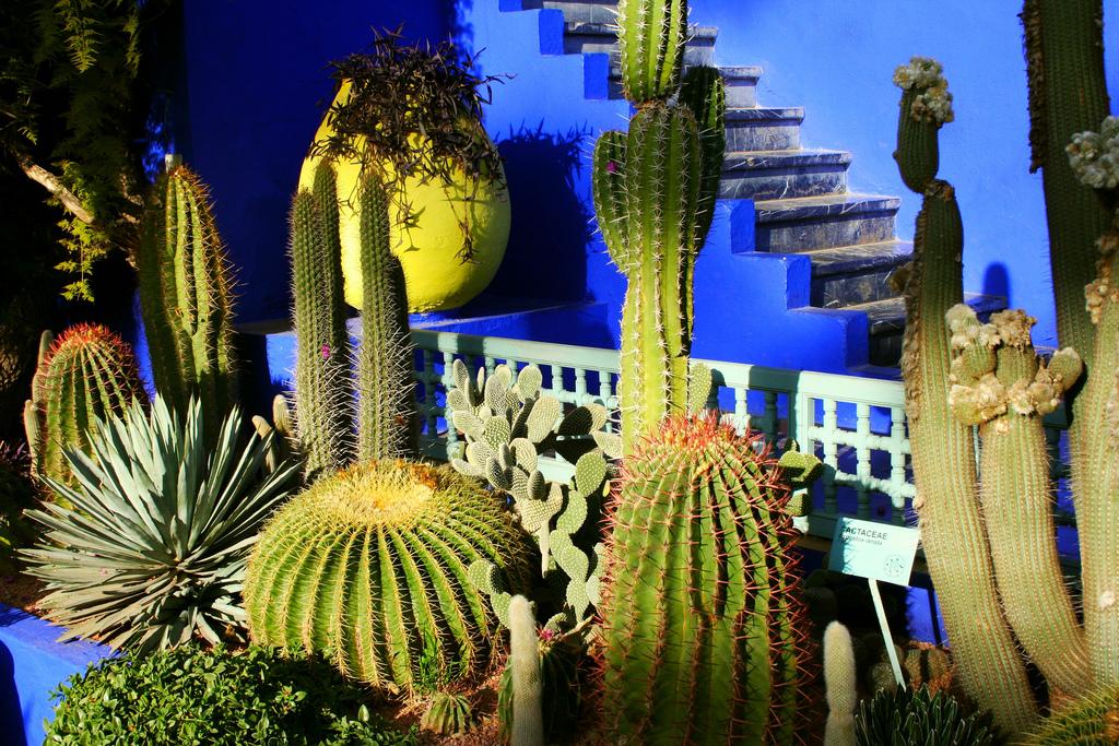 Jardin Majorelle, Marrakech by ninara on Flickr