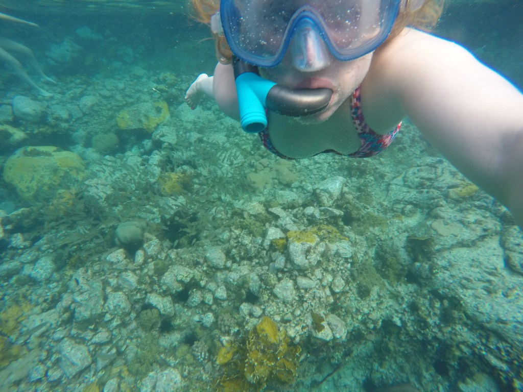 Snorkeling in Martinique | TheWeekendJetsetter.com