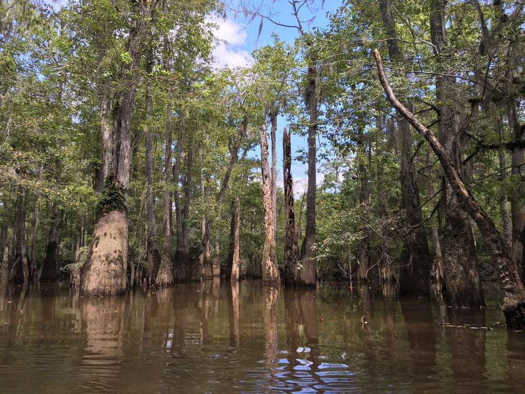swamp-tour-new-orleans