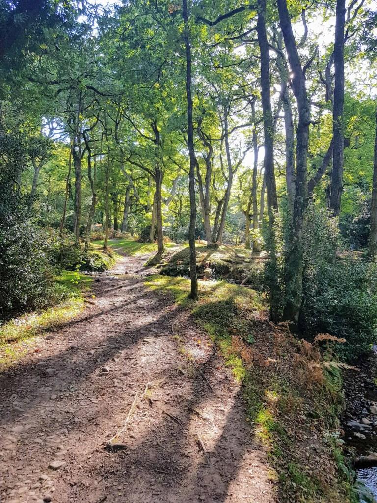 Quantocks Woodland