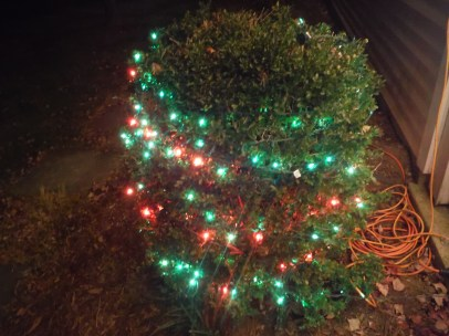 Bush with Lights