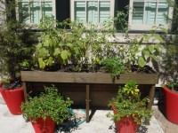 Tomatoes, Eggplant, Pepper, and Basil