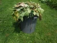 Bad Leaves