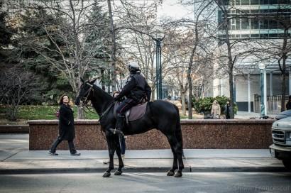 horse cop