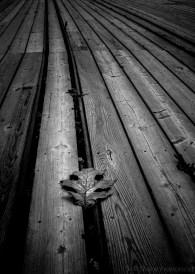 oak leaf b/w