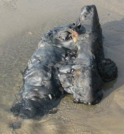 What was found on the beach, 2008