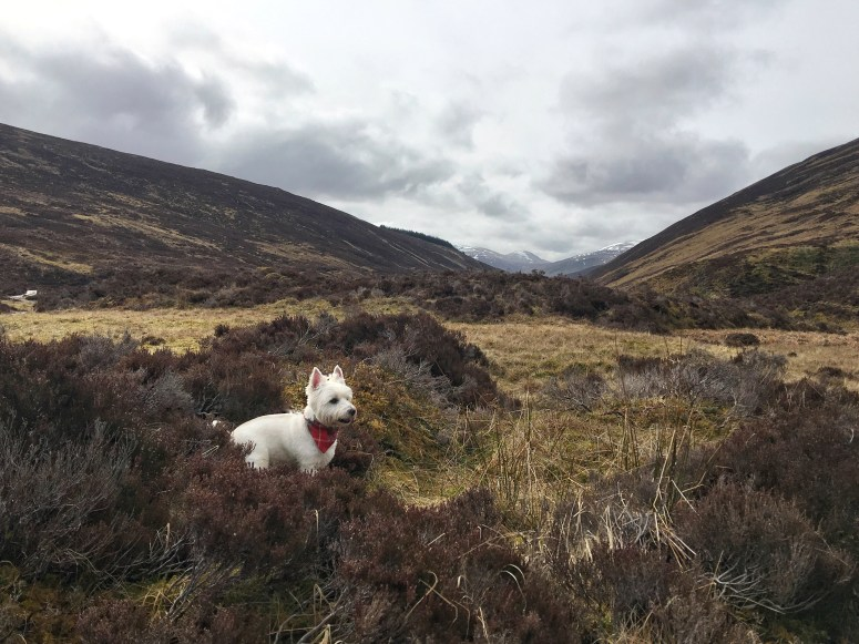 Glen Lyon walks