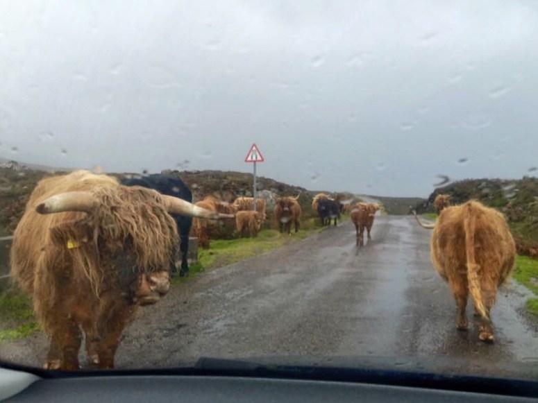 Traffic jam, NC500