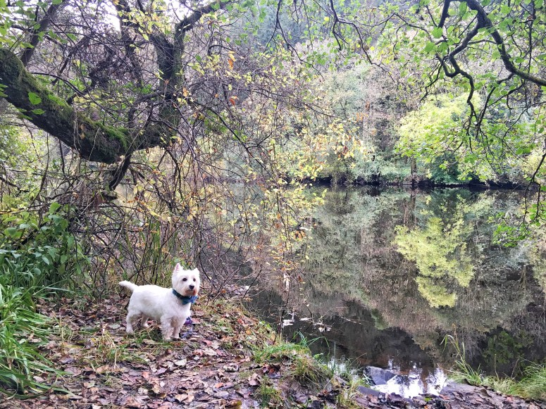 Fall sof Clyde walk