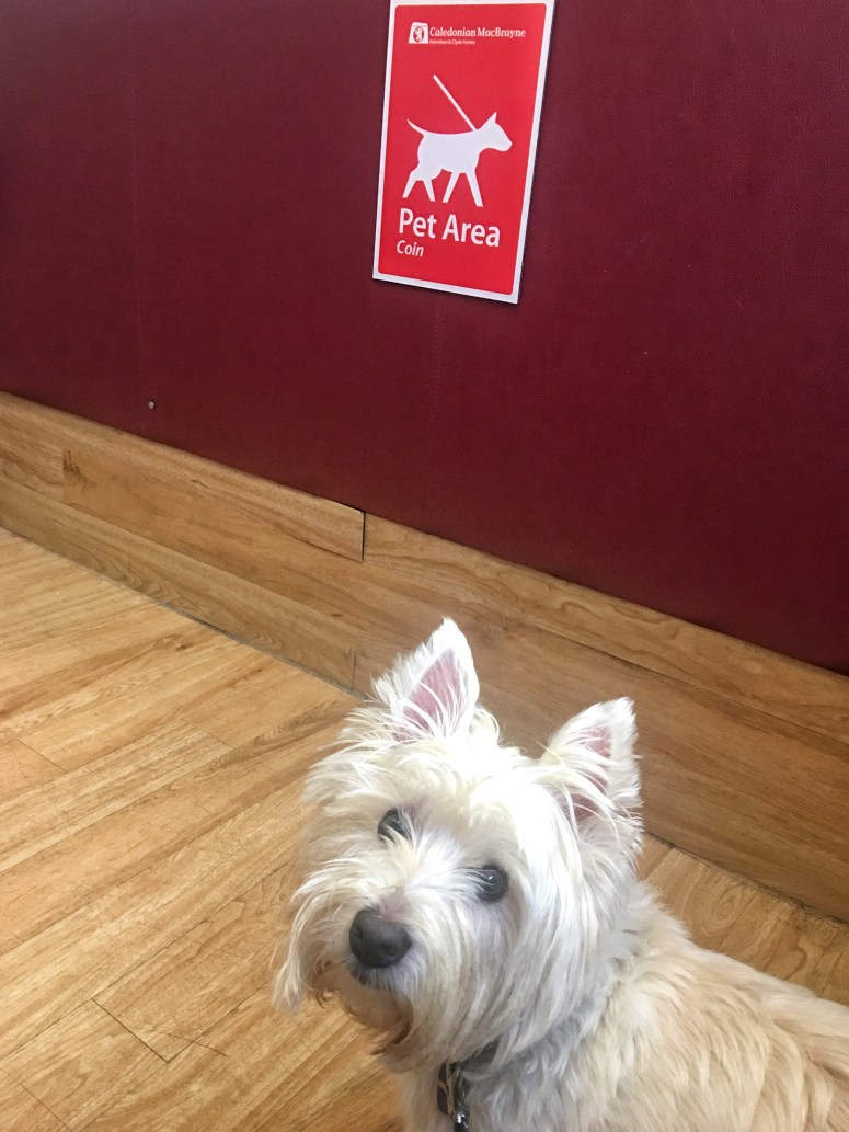 Dog friendly CalMac