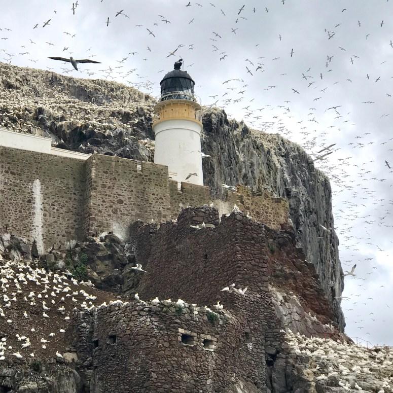 Gannets Bass Rock Lighthouse