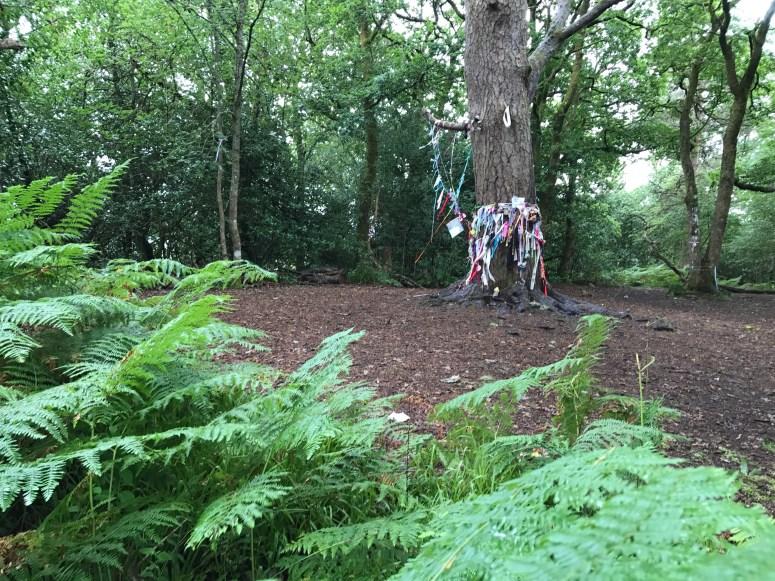 Doon Hill Fairy Trail