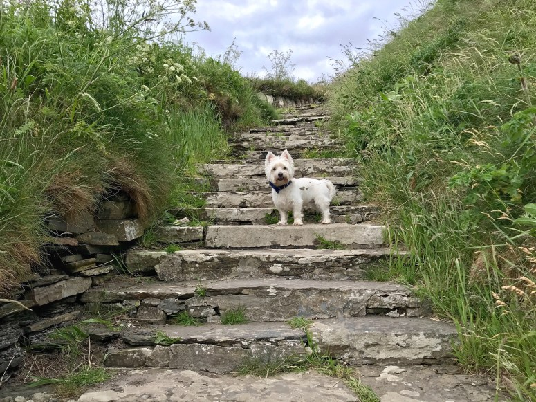 Whaligoe Steps, Caithness