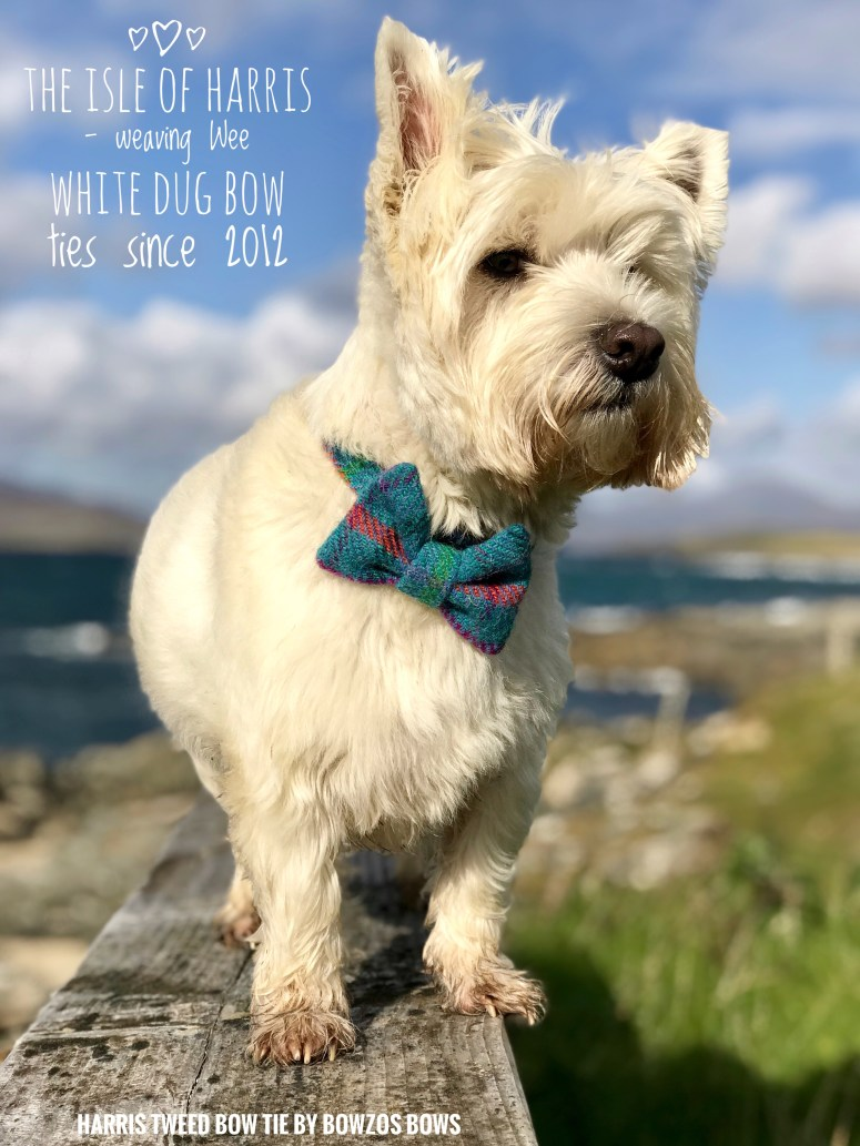 The Wee White Dug