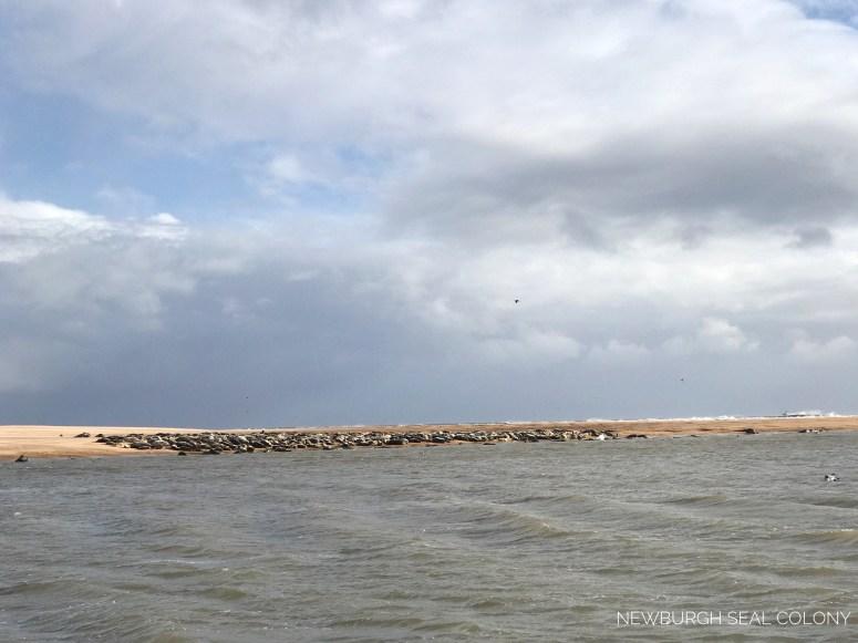 Newburgh seal colony, Aberdeenshire