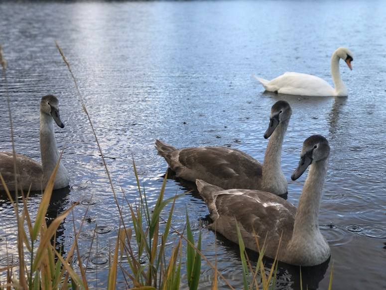 Pitfour Lake, Aberdeenshire