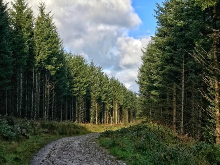 Drinnie's Wood, Aberdeenshire