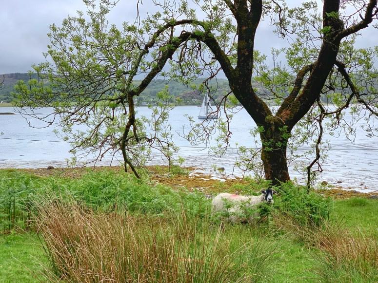 Lismore Island