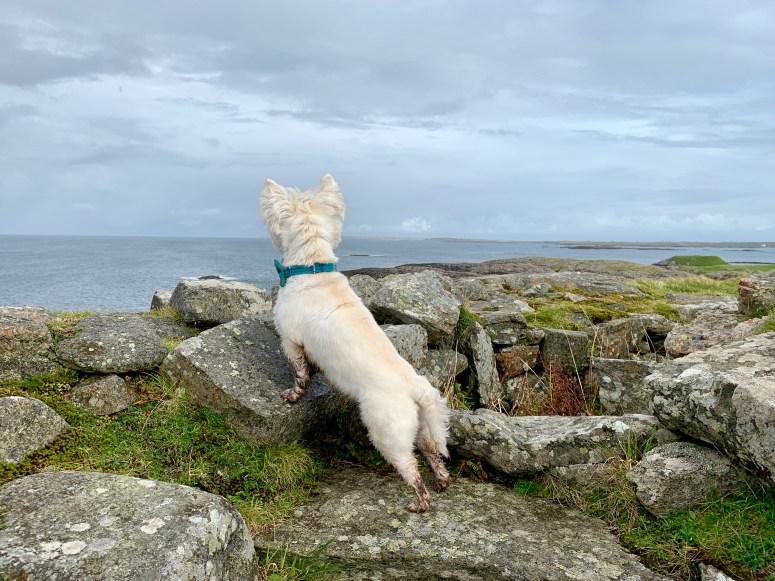 Dun Mor Broch, Isle of Tiree