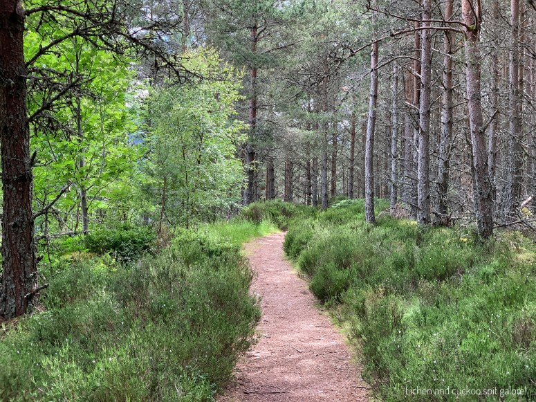 Walks in the Cairngorms National Park