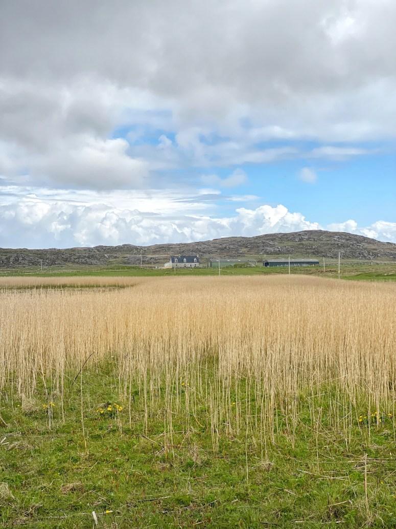 Corncrake habitat, Isle of Coll