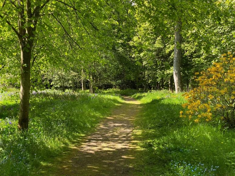 Woodland Walk, Floors Castle
