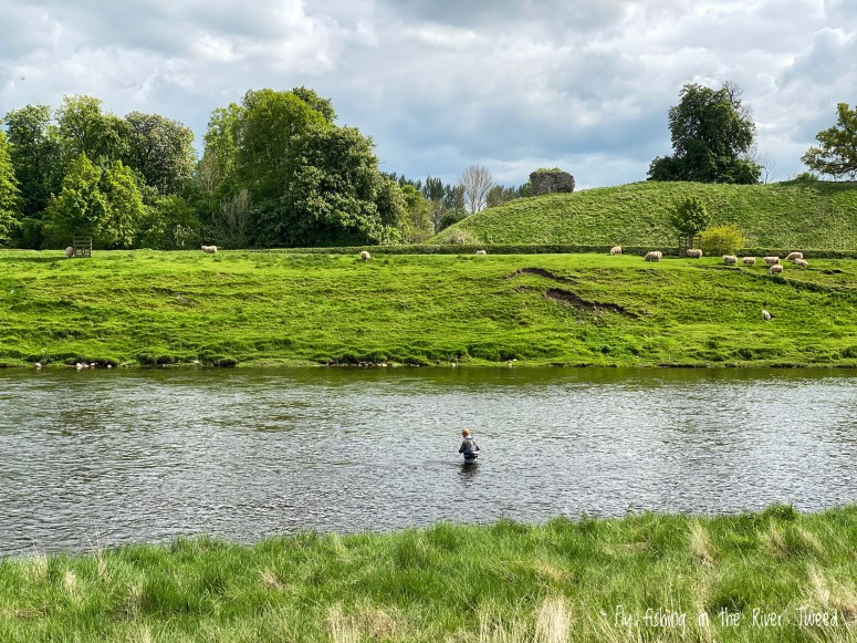 Fly fishing, River Tweed
