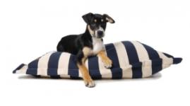 blue-stripe-pet-bed