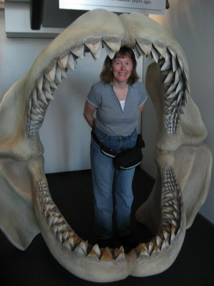 Lynda in Shark teeth