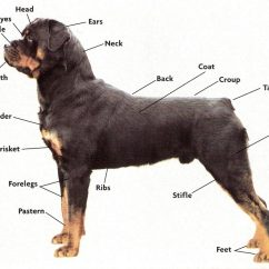 Dog Hind Leg Diagram Wb Holden Wiring Get To Know Your Pets Parts The Well Groomed Pet