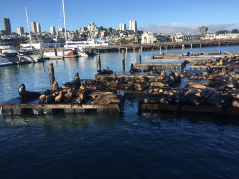 The Well-Intended at San Francisco's Famous Pier 39 Seals