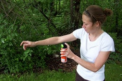 How Can Essential Oils Help You Repel Insects