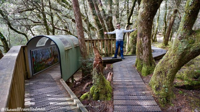 thewelltravelledman enchanted walk cradle mountain tasmania