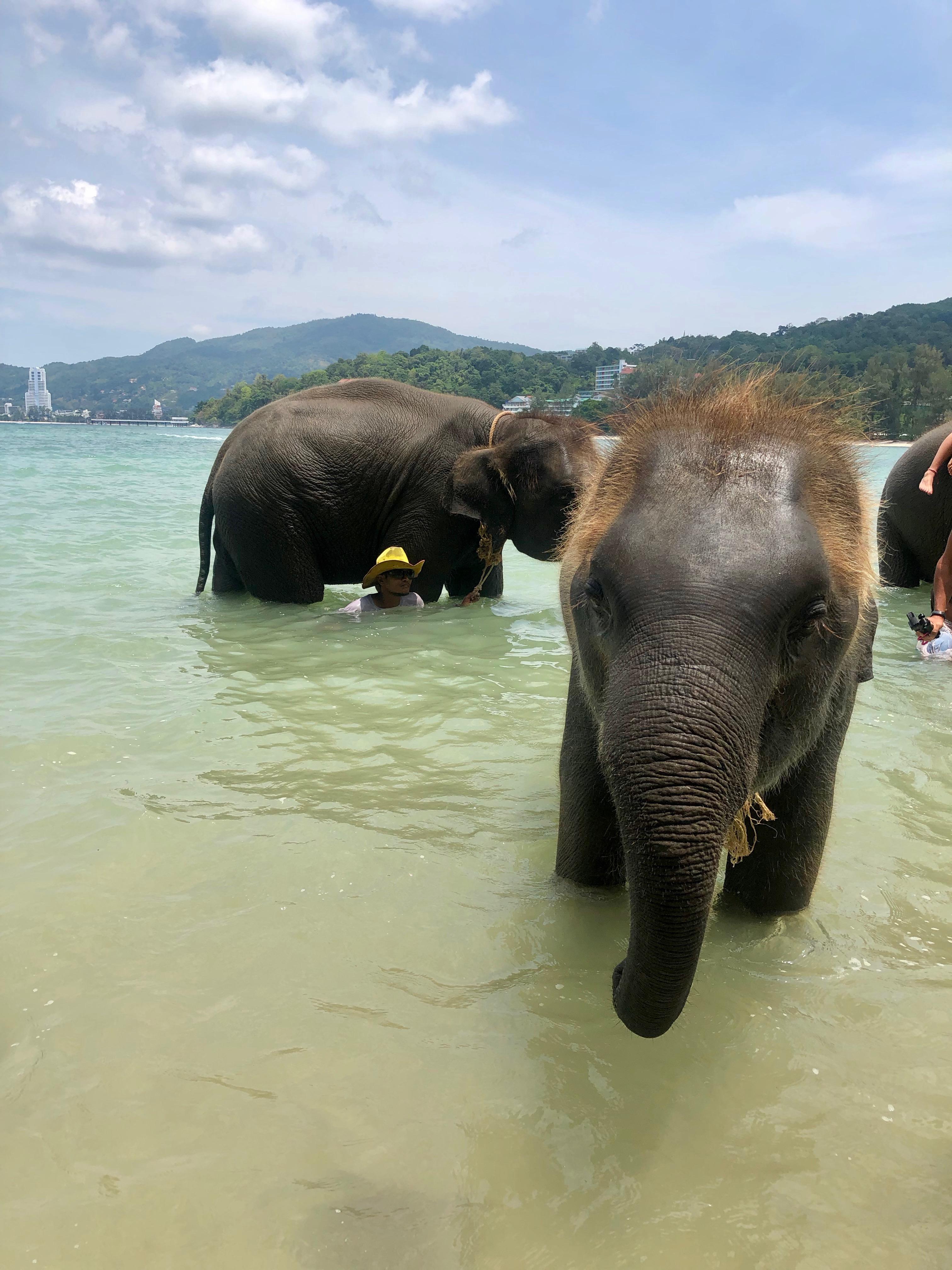 thewelltravelledfamily tri trang beach elephants