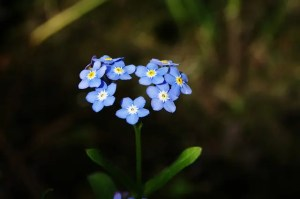 Read more about the article Forget-Me-Not: Caring for Those with Alzheimer's and Dementia