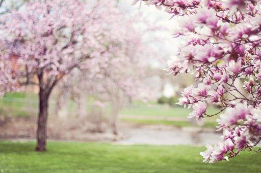 trees in full bloom in spring season