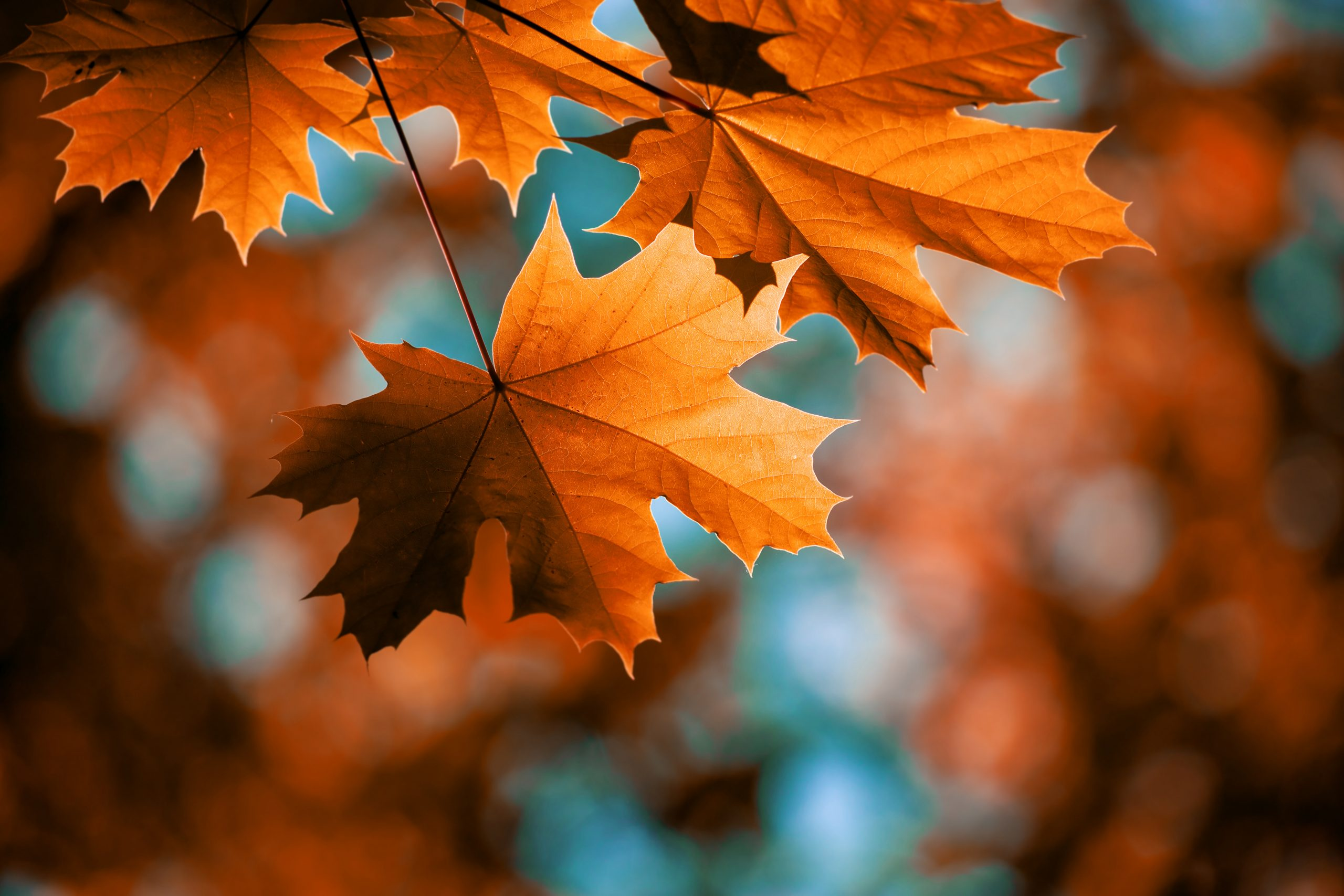 Read more about the article Let Go with Fall: 7 Ways to Change with the Season
