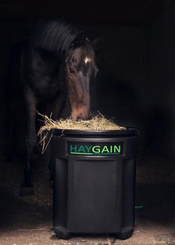 Equine Respiratory health