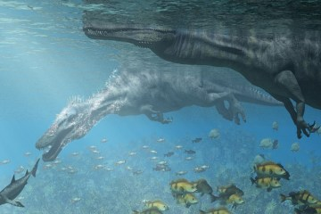 Semi-aquatic dinosaur fossil found across two continents