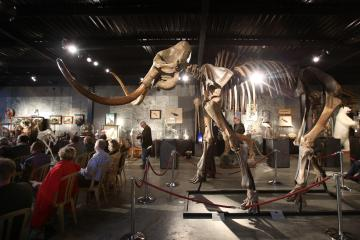 50,000-year old mammoth skeleton sells for $300,000 at British auction