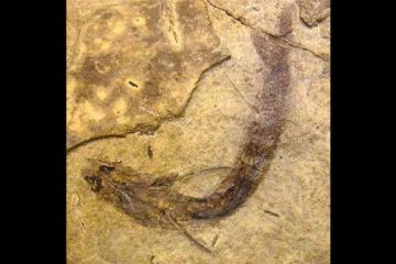 la-sci-sn-fossilized-fish-rods-cones-20141223-001